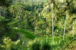 Bali indonesia gunung kawi