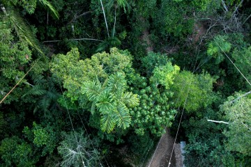 riserva-tambopata-rainforest-expeditions2