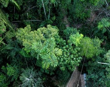 riserva-tambopata-rainforest-expeditions2