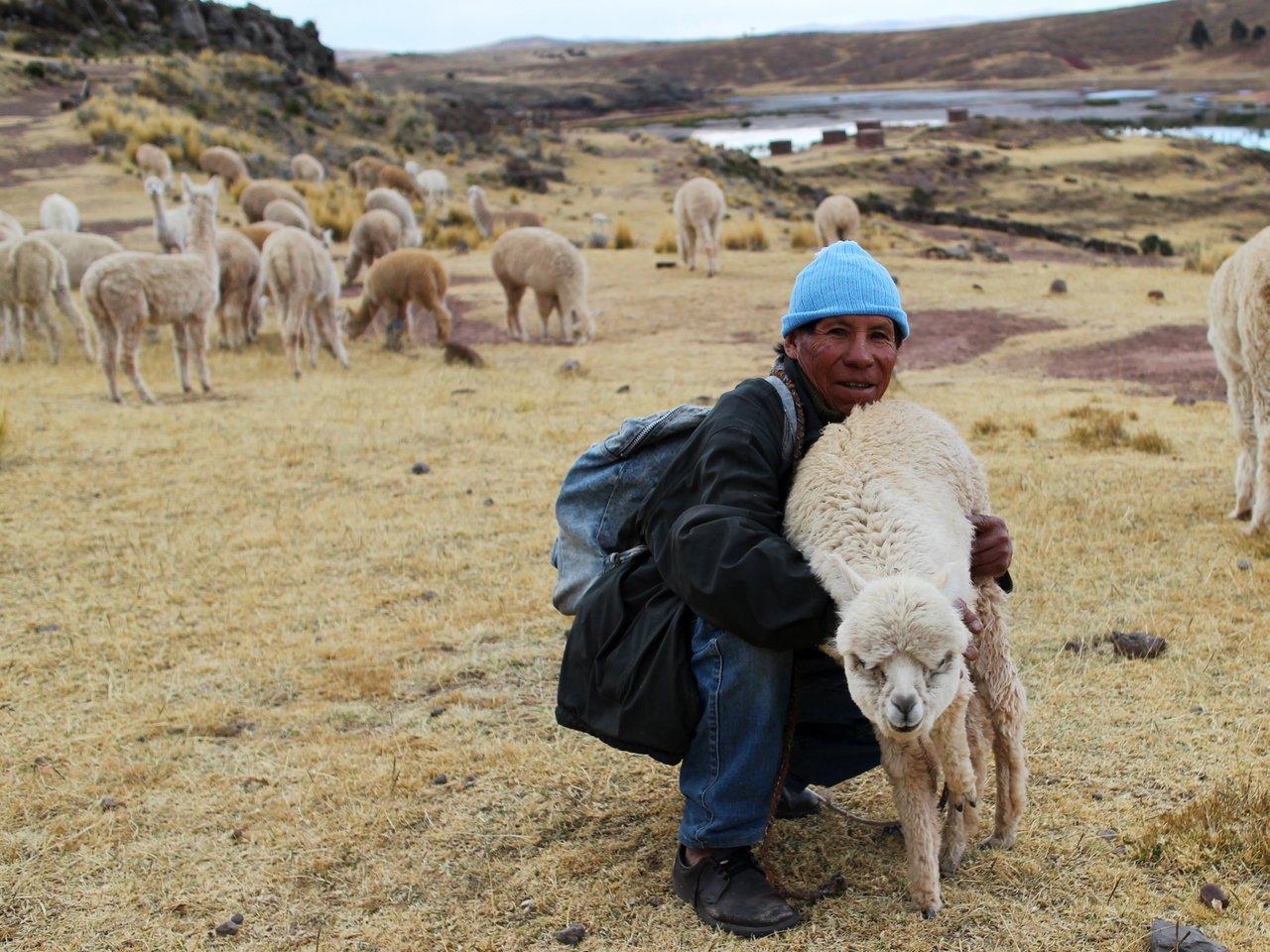 lago titicaca fai da te: un pastore a sillustani