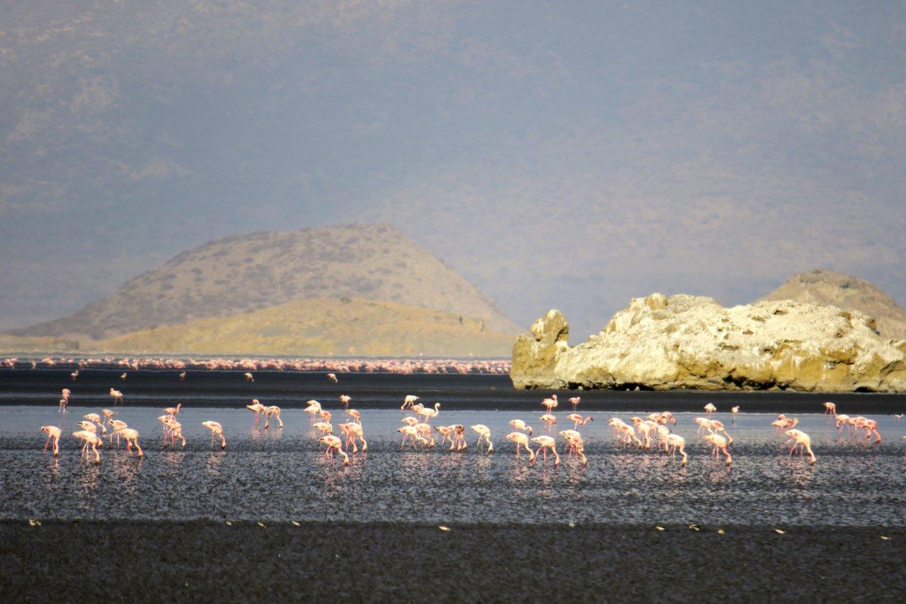 tanzania itinerario fai da te. Fenicotteri sul lago Natron