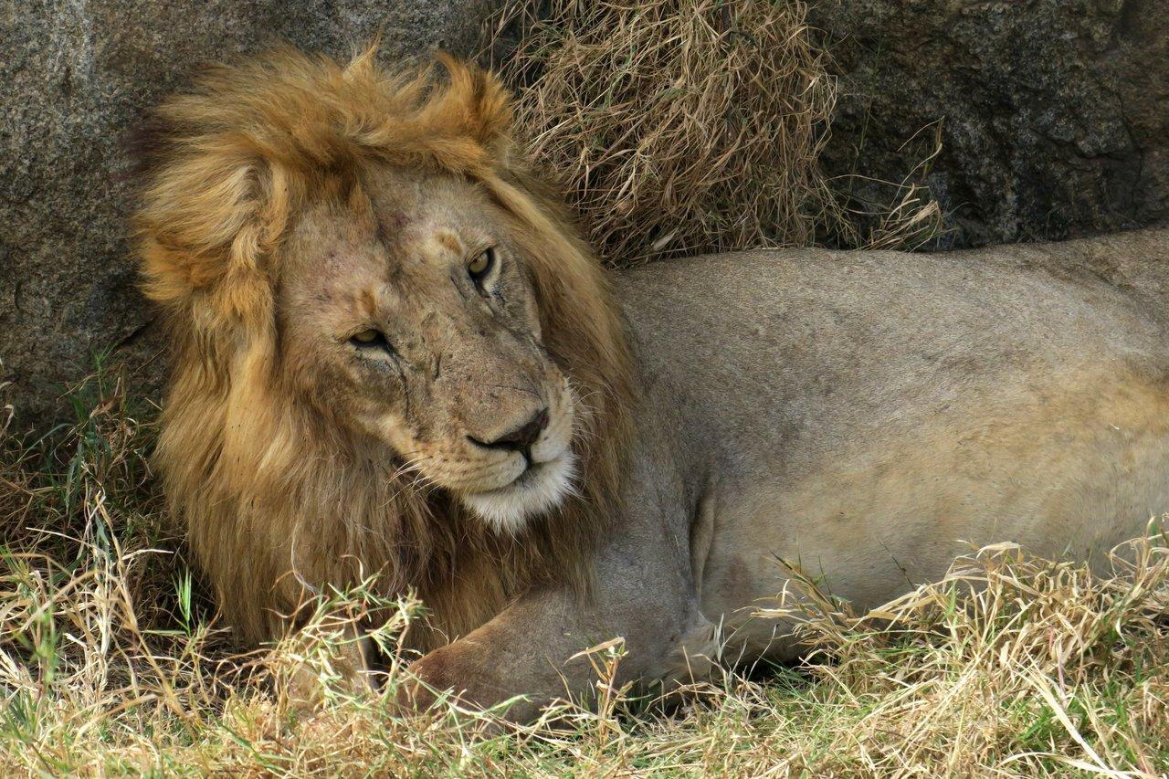fotocamera-safari-fotografico-10