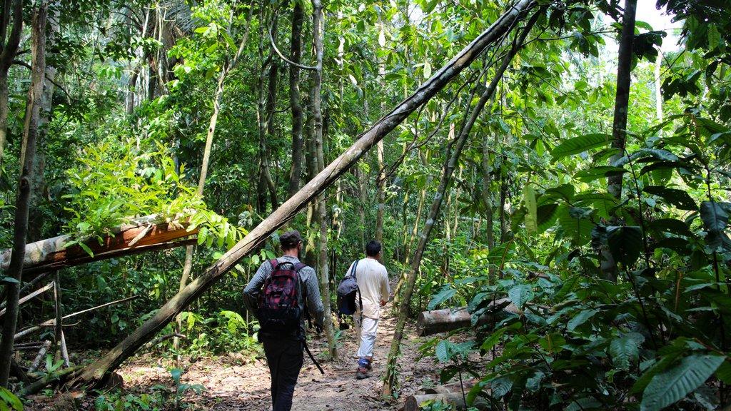 A spasso per la Foresta Amazzonica