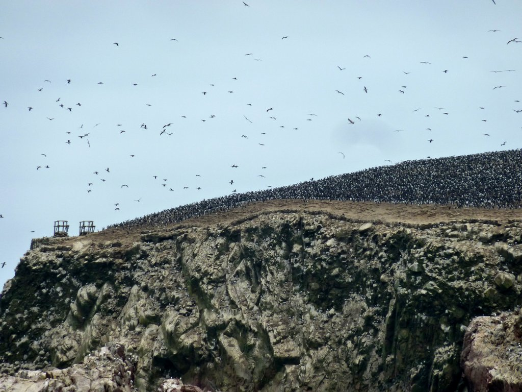 Migliaia di uccelli sorvolano le isole Ballestas