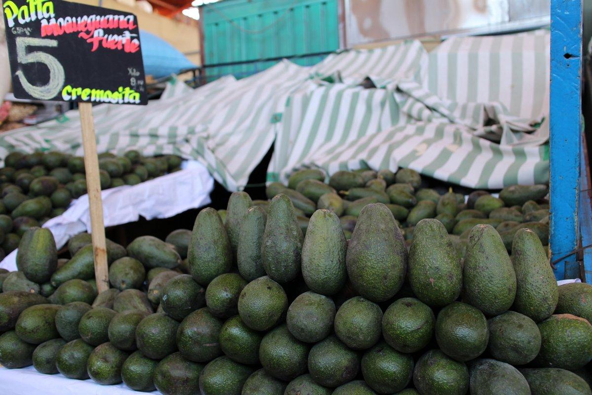 mercato coperto di san camilo: avocado