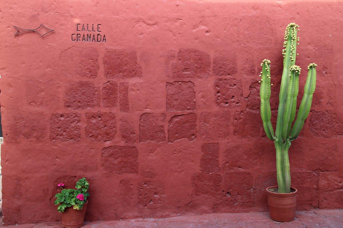 Arequipa, Monasterio de Santa Catalina: cactus