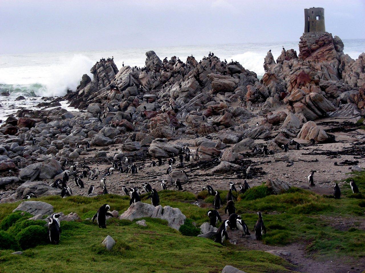 sudafrica itinerario: pinguini Boulder Beach