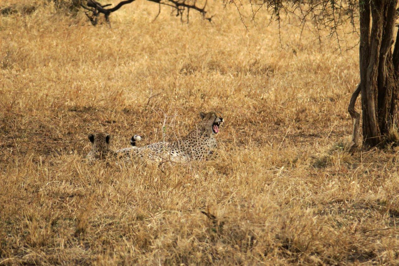 fotocamera-safari-fotografico-13