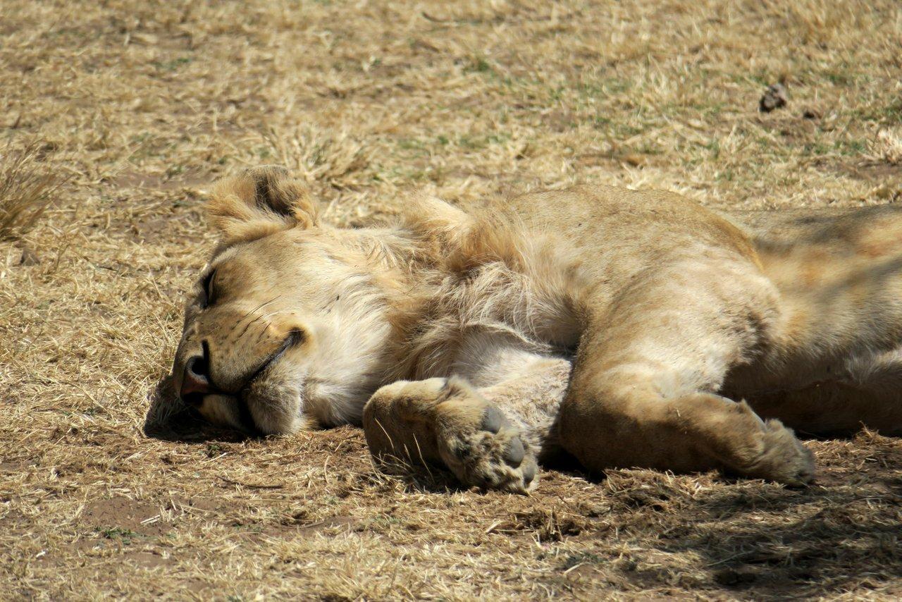 fotocamera-safari-fotografico-14