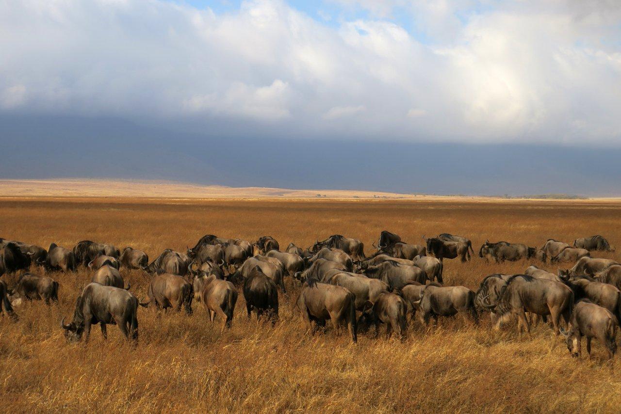 fotocamera-safari-fotografico-17