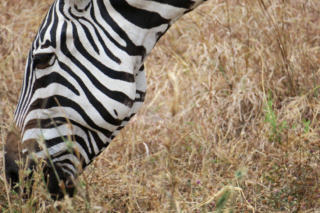 fotocamera-safari-fotografico-2