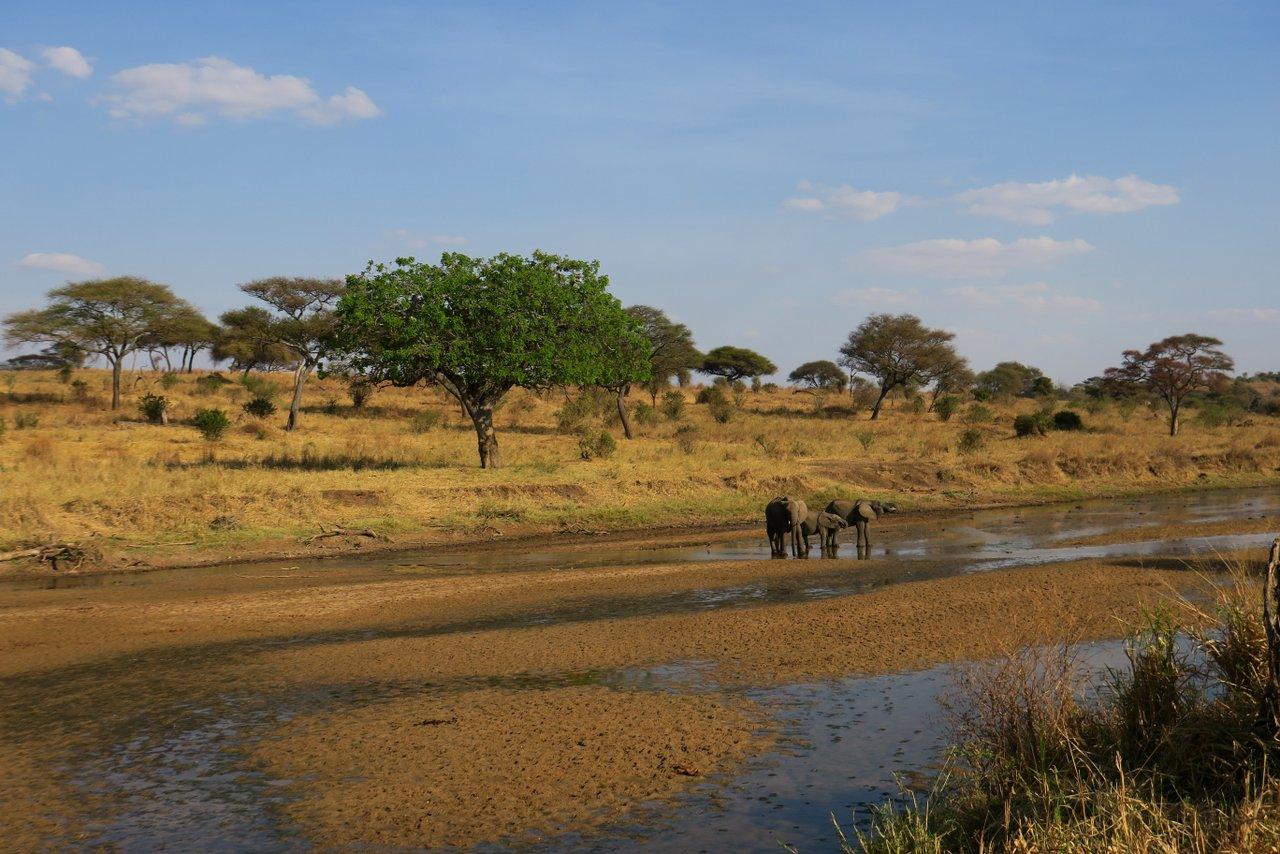 fotocamera-safari-fotografico-7