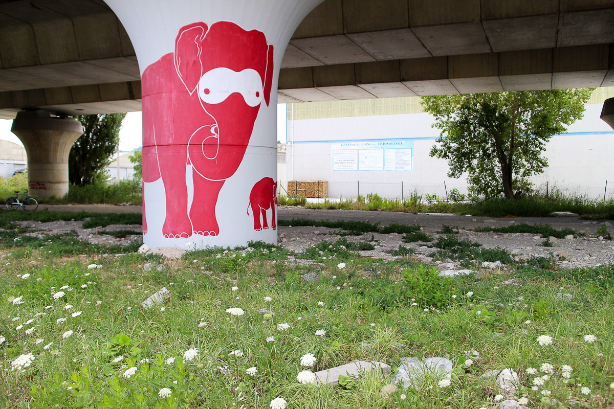 023_street-art_ancona_carapaucostante