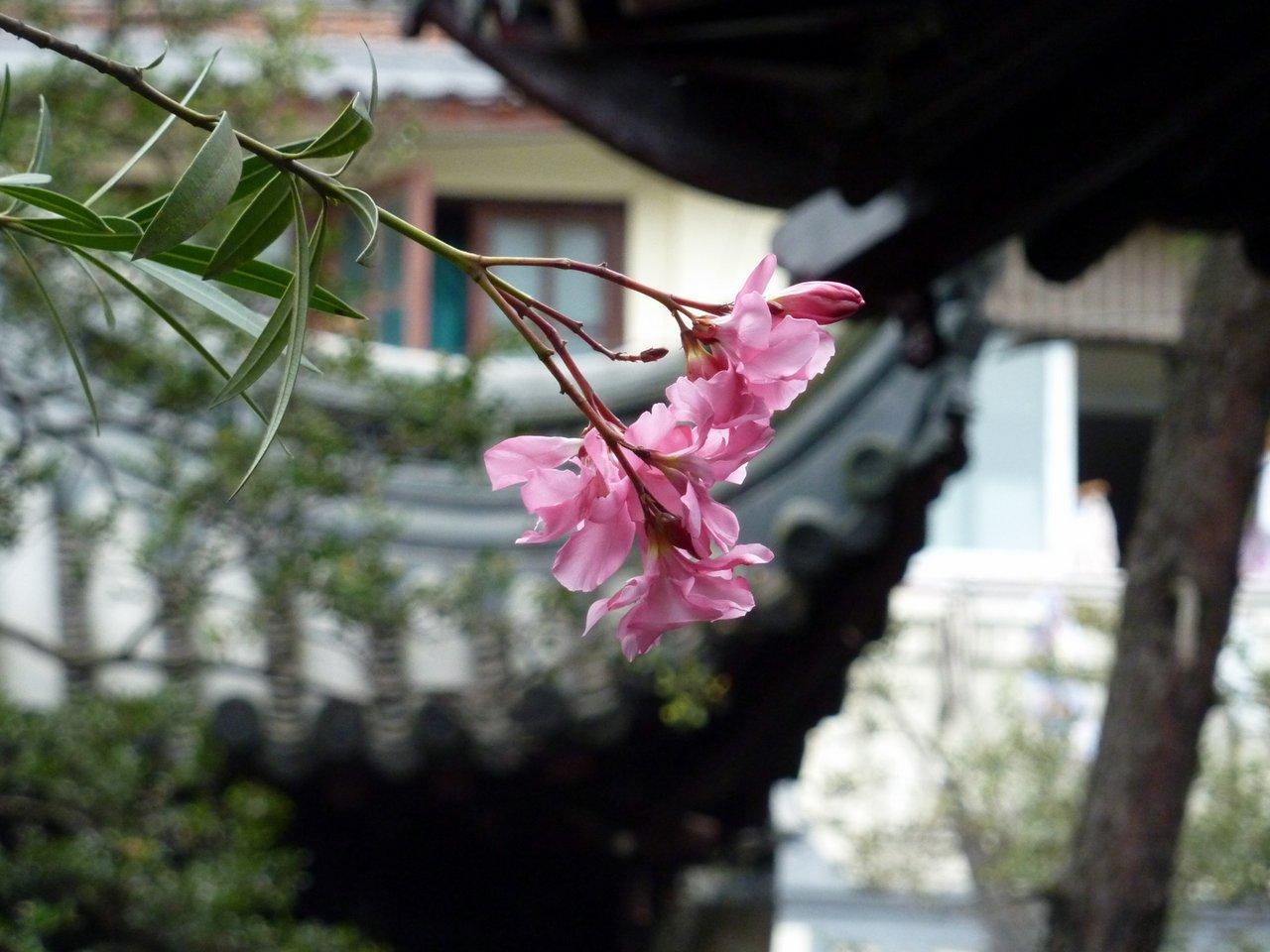 itinerario di quatto settimane in cina: Il giardino del mandarino Yu