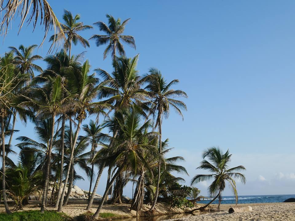 itinerario di tre settimane in colombia: Spiagge serlvagge nel parco Tayrona