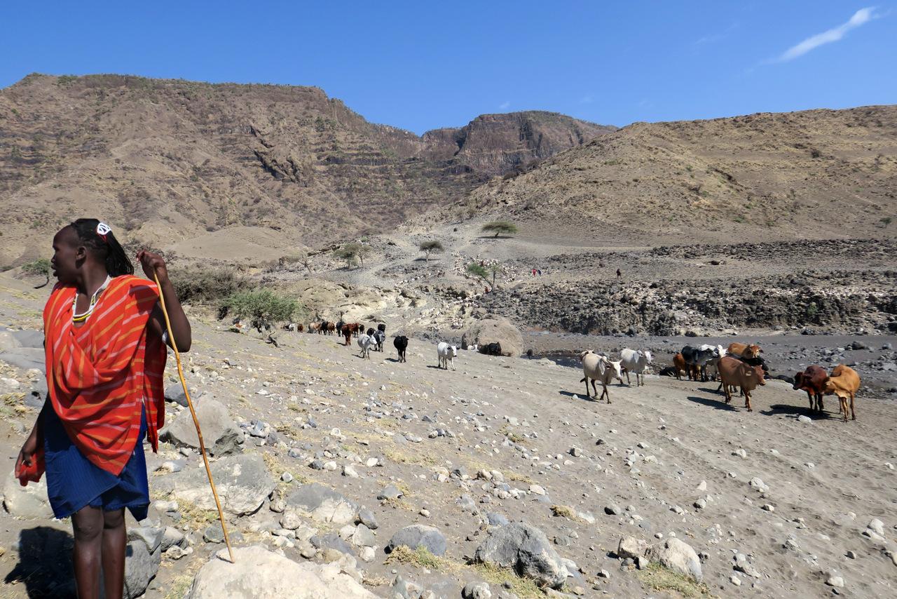 lago natron tanzania: un pastore masai al pascolo