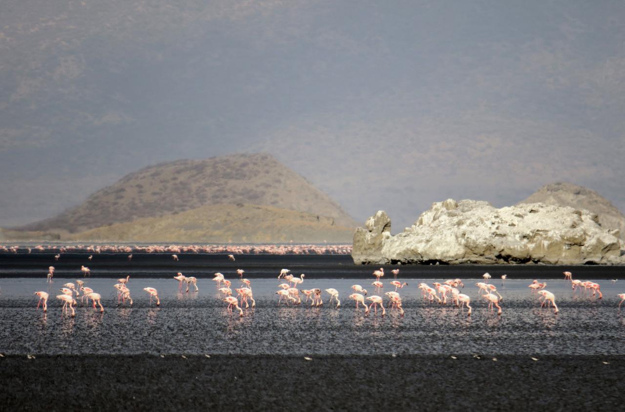 lago natron tanzania: migliaia di fenicotteri affollano il lago